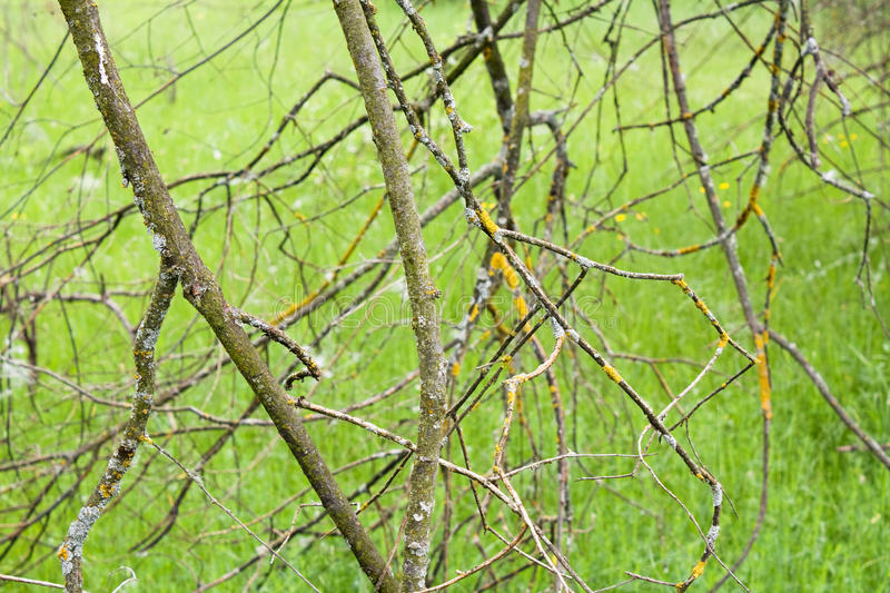 Download Dry branches stock photo. Image of trees, branch, stick - 22208006