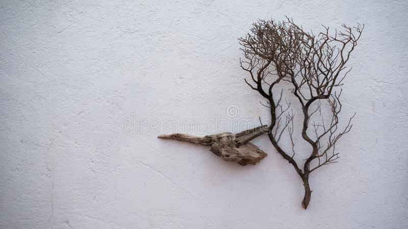 Dry branches on wall, calmness. Dry branches, an art installation and part of decor, calmness mood photo stock photos