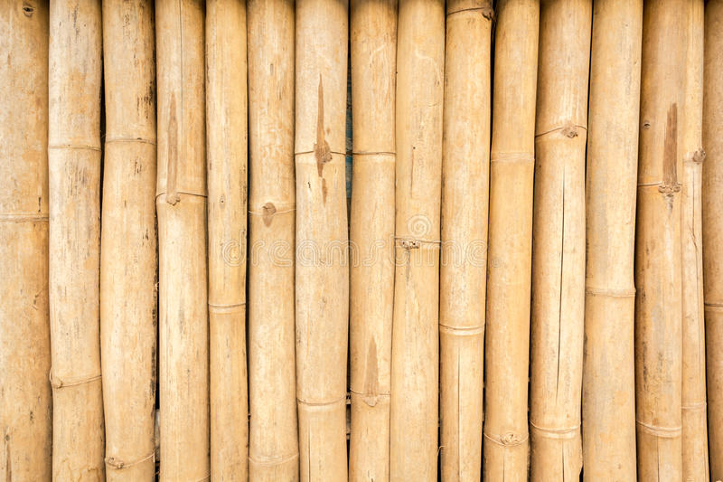 Dry Brown bamboo texture stock image