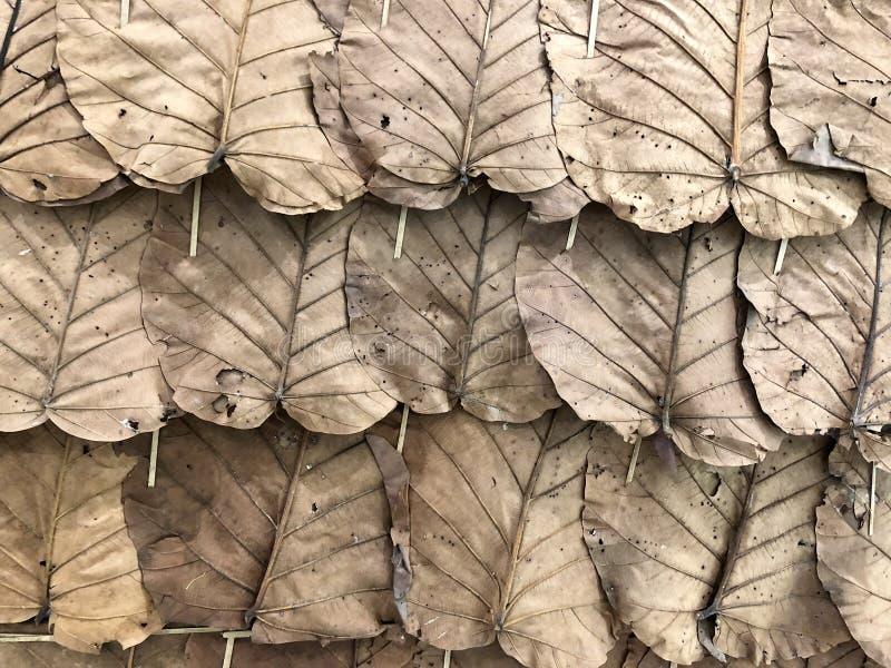 Dry leaf background stock photo