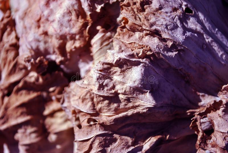 Dry brown leaf texture, natural organic background, close up detail, soft sepia-purple wavy lines stock images