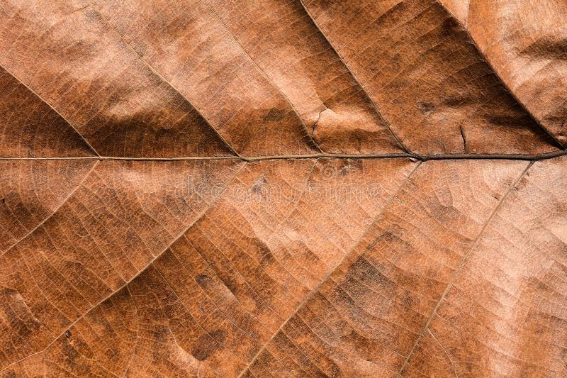Dry brown leaves texture. Background royalty free stock image