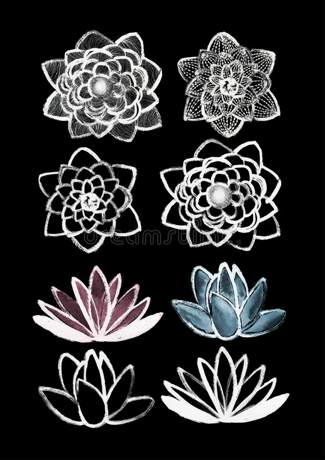 Dry brush lotus set vector illustration