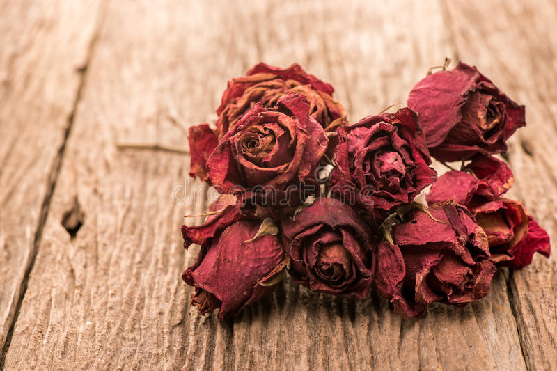 Dry bud of a red rose flower stock photography