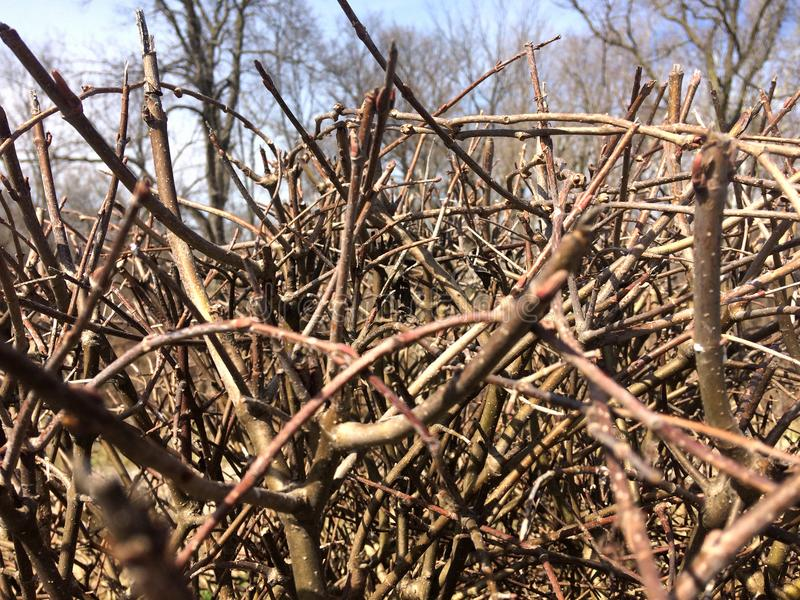 Dry bushes. thorn brown branches without leaves.  royalty free stock image