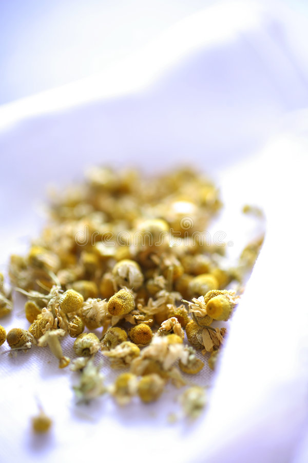 Download Dry chamomile tea stock photo. Image of strong, tasty - 7540456