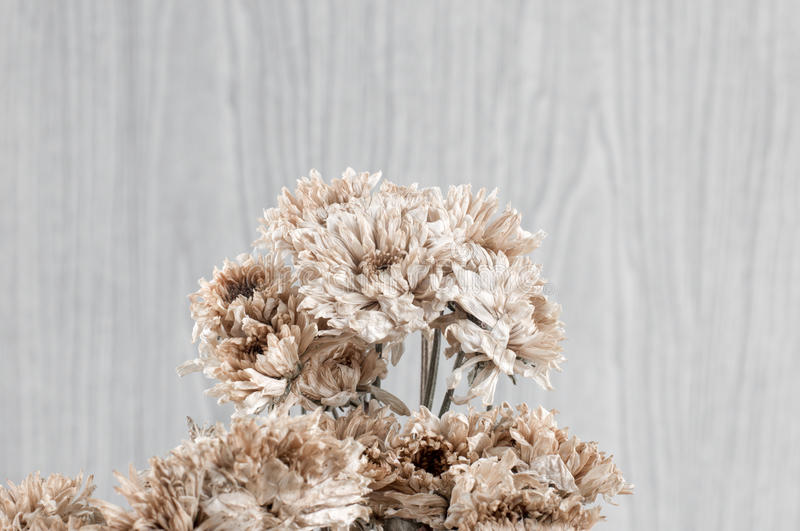 Dry of Chrysanthemum Flower Bouquet royalty free stock photo
