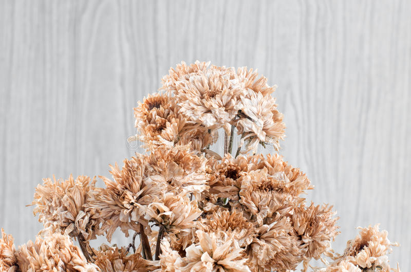 Dry of Chrysanthemum Flower Bouquet royalty free stock photos