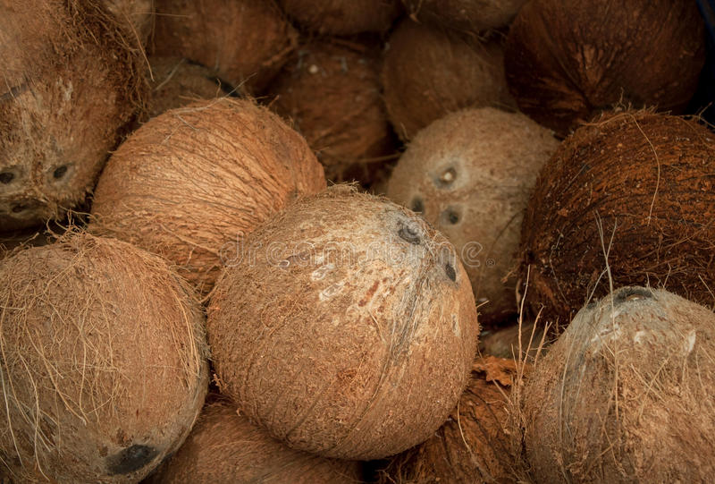 Download Dry coconut stock image. Image of hairy, fruit, gourmet - 25498673