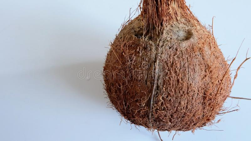 Dry coconut royalty free stock photography