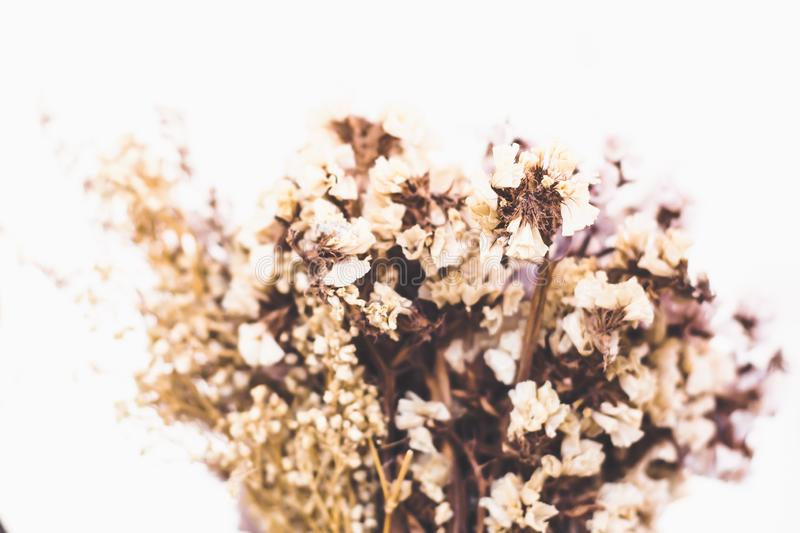Dry color grass flower for interior decoration. Flower. Bouquet of lavender at home stock photos