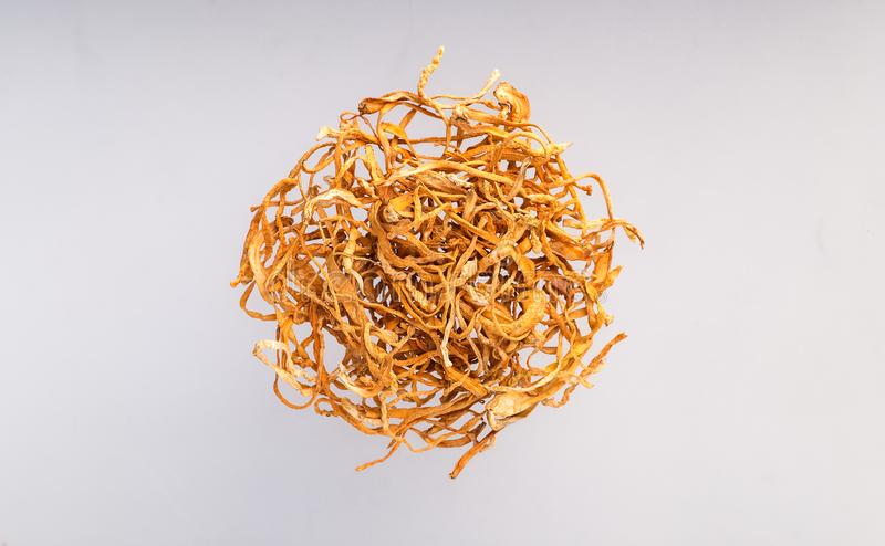 Dry Cordyceps militaris. Chong cao, China herbal isolated royalty free stock photography
