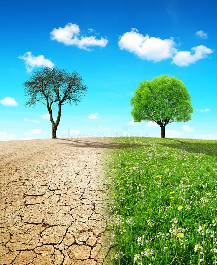Dry country with cracked soil and meadow with growing tree. Concept of change climate or global warming stock image