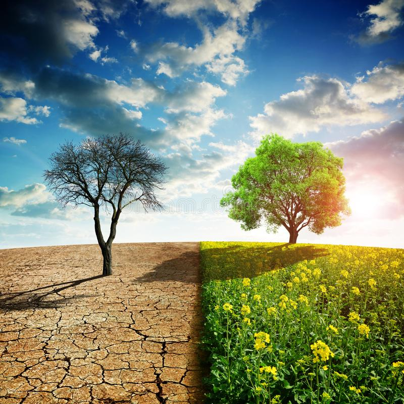 Dry country with cracked soil and rapeseed field with green tree. Concept of change climate or global warming stock images