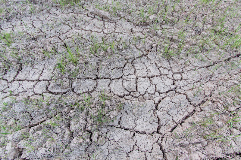 Dry cracked ground. Warming dryness infertile royalty free stock photos