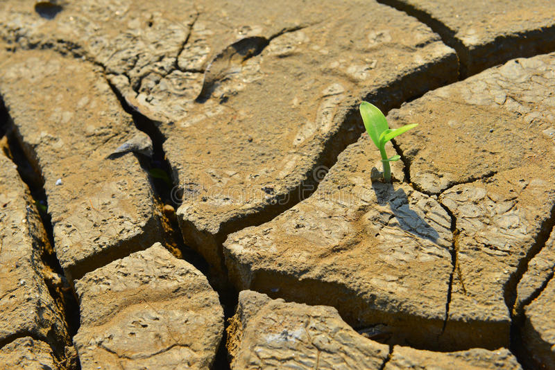 Dry cracked land green shoot,pollution land adversity heal the world new hope life protect environment stock photos