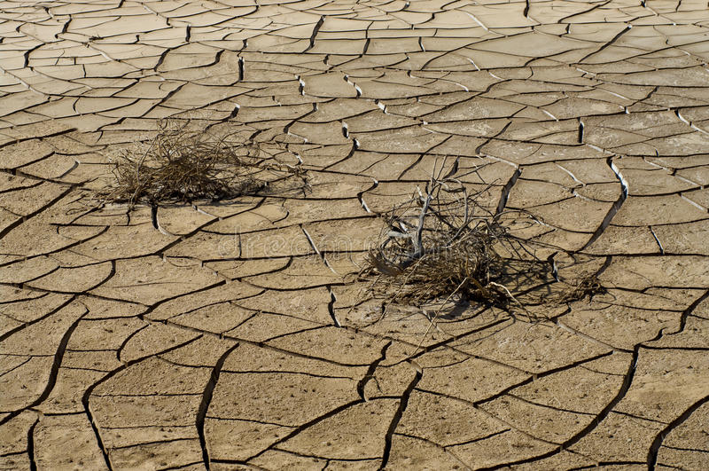 Dry cracked soil and plant royalty free stock image