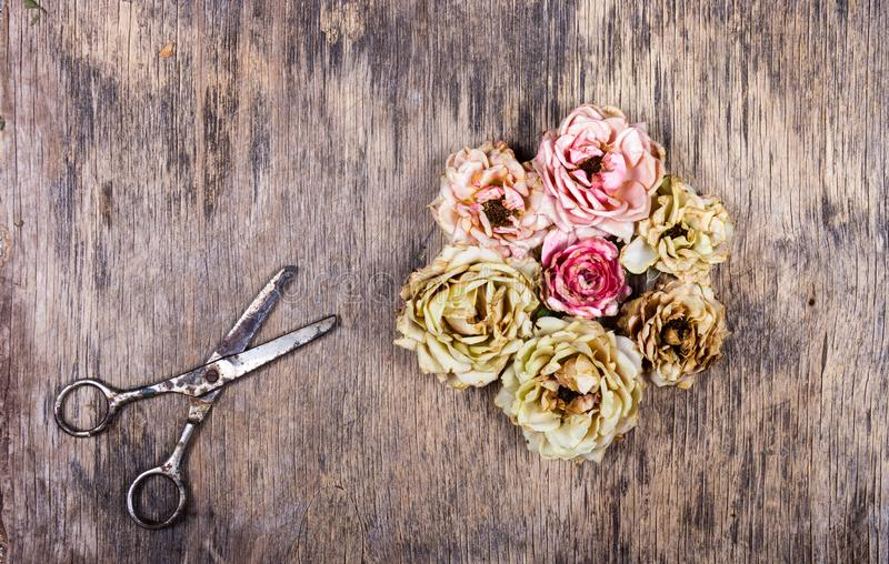 Dry cut roses and rusty scissors on an old wooden background. Dead flowers. Dry cut roses and rusty scissors on an old wooden background stock image