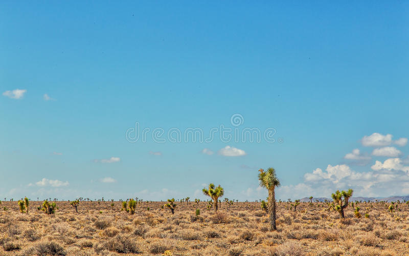 Dry desert and cactus. Flat, dry desert with tumbleweed and tall cactus stock images
