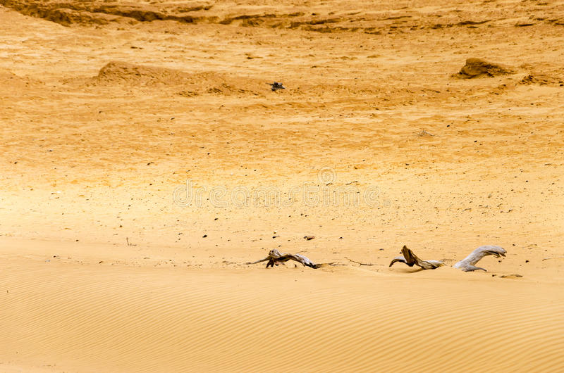 Dry Desert Sands. Dry sandy desert with wood from dead trees royalty free stock photos