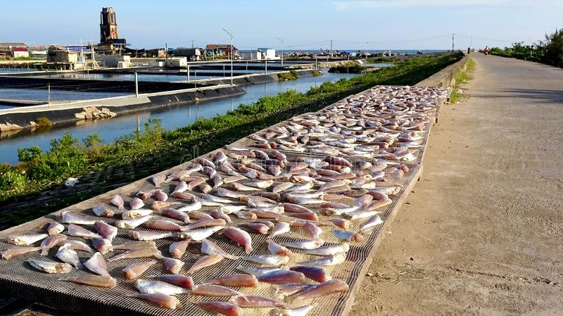 Dry dried fish in the sun on the sea dike royalty free stock photos
