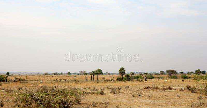 Download Dry Season Myanmar Landscape Stock Photo - Image: 30147806