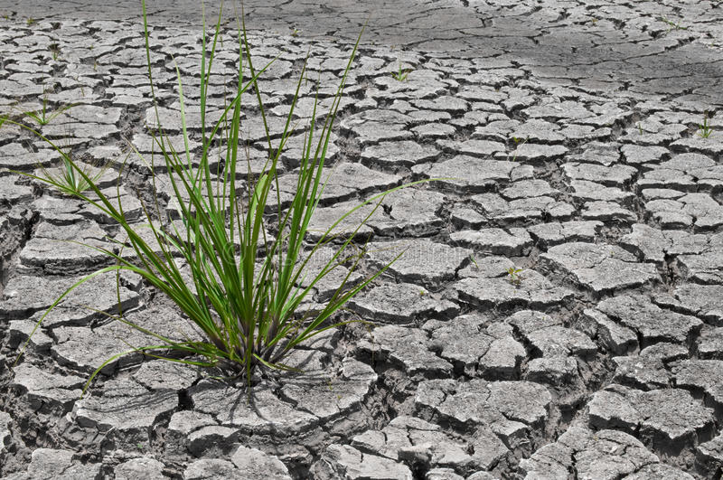 Dry earth. In the dry season in Thailand royalty free stock images