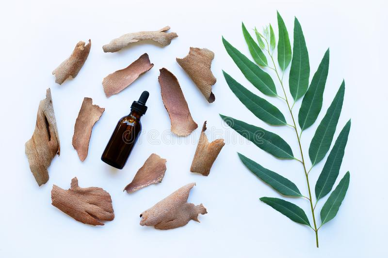 Dry eucalyptus bark with essential oil and branch stock photos