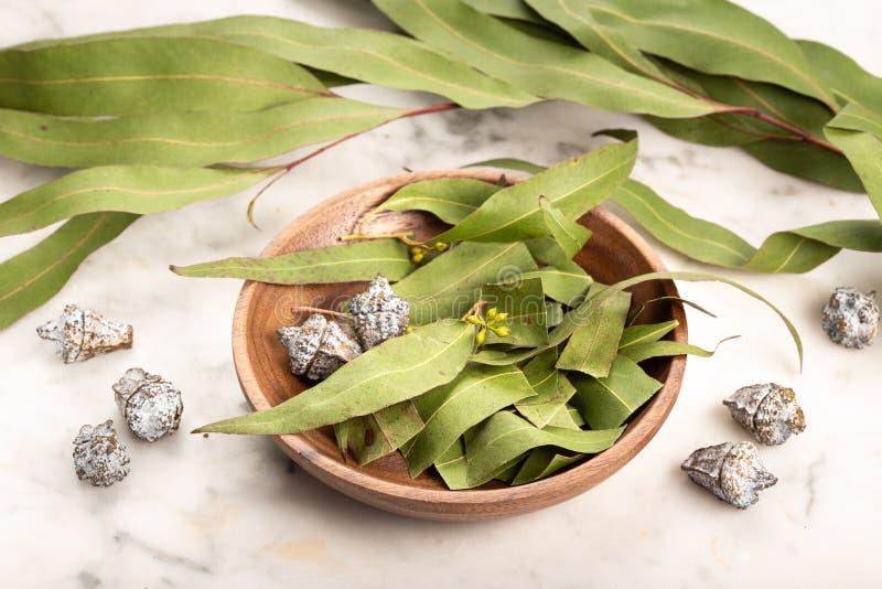 Dry eucalyptus leaves stock photo