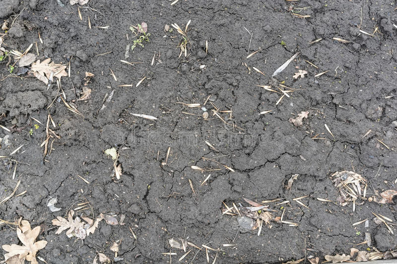 Dry fall ground with some ash seeds royalty free stock photos