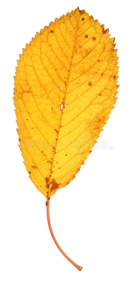 Dry fall leaf stock image