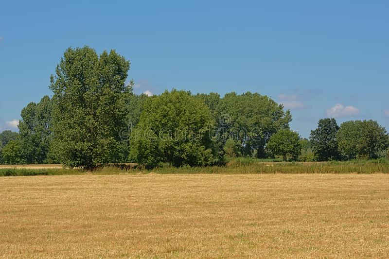 Dry farmland with trees under a clear blue sky in Kalkense Meersen nature reserve, Flanders, Belgium. Dry farmland with trees under a clear blue sky on a sunny royalty free stock photos