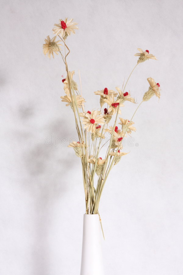 Free Dry Flower Stock Image - 3527021