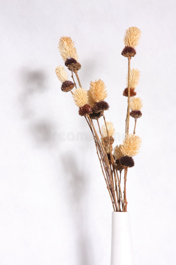 Download Dry Flower Stock Photos - Image: 3527043