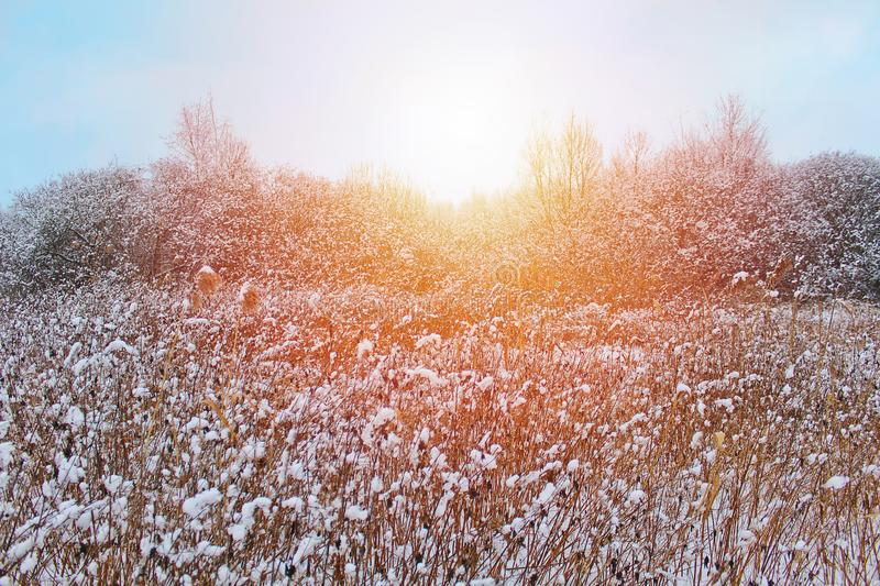 Dry flower covered with snow and trees, Czech winter landscape.  stock images