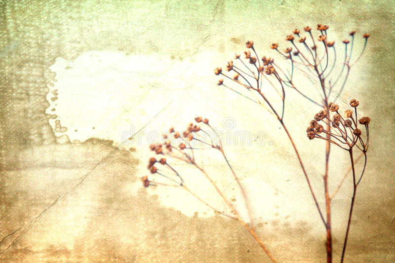 Dry flower on old book background. stock photos