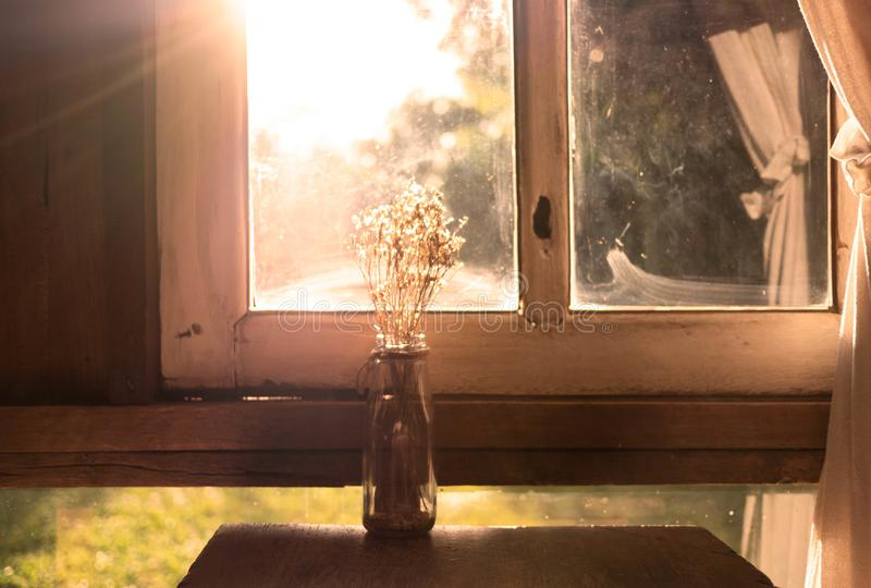 Dry flower vase on wooden table near the window in room with sunlight in evening. Autumn concept royalty free stock photography