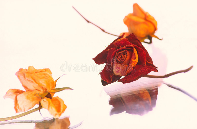 Dry flowers stock photography