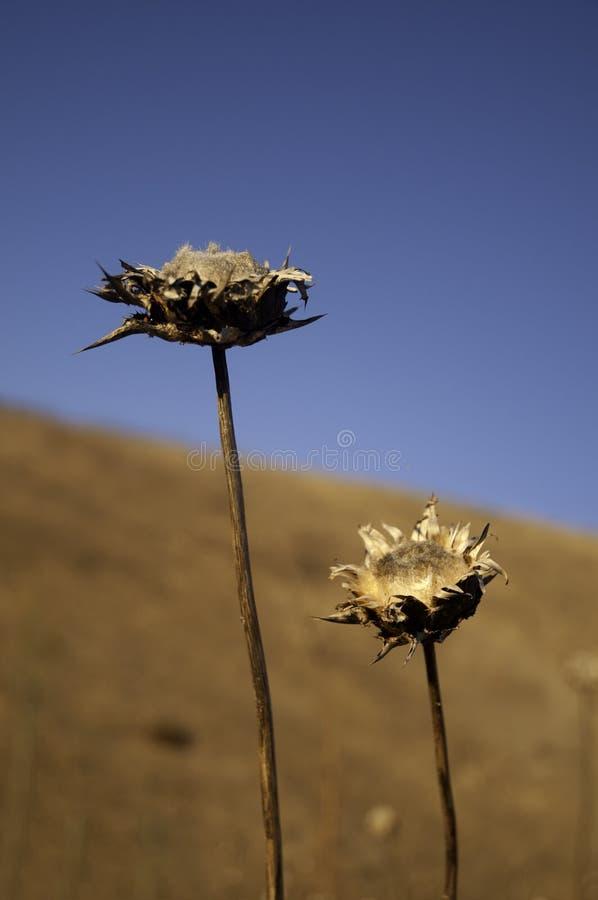 Dry Flowers stock photo