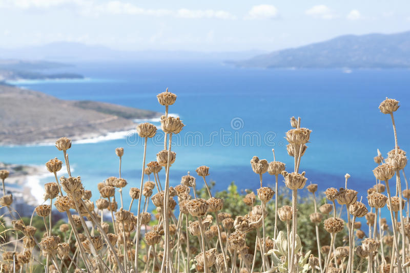 Dry flowers in front of high spectacular ocean view. Dried flowers in front of a spectacular view of the Albanian riviera from high up a mountain royalty free stock photos