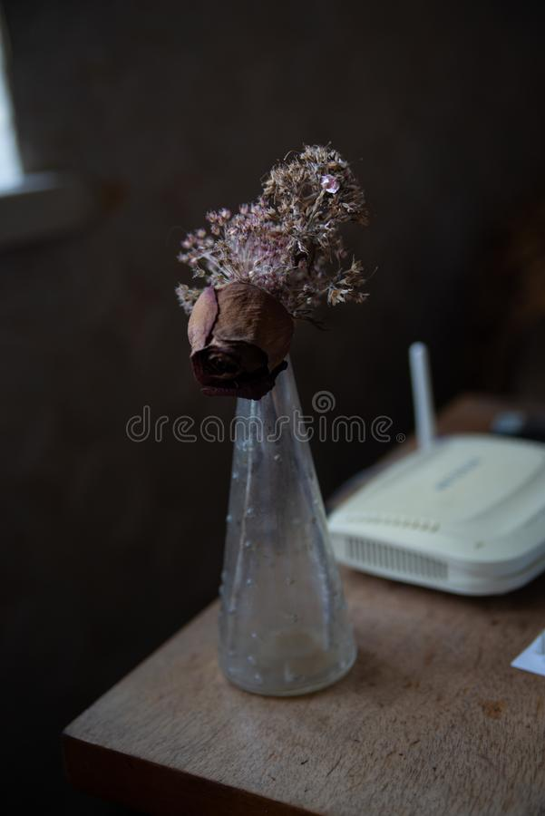 Dry flowers in a vase stock photography