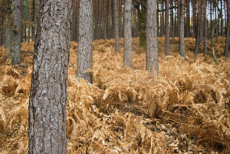 Dry forest stock photo