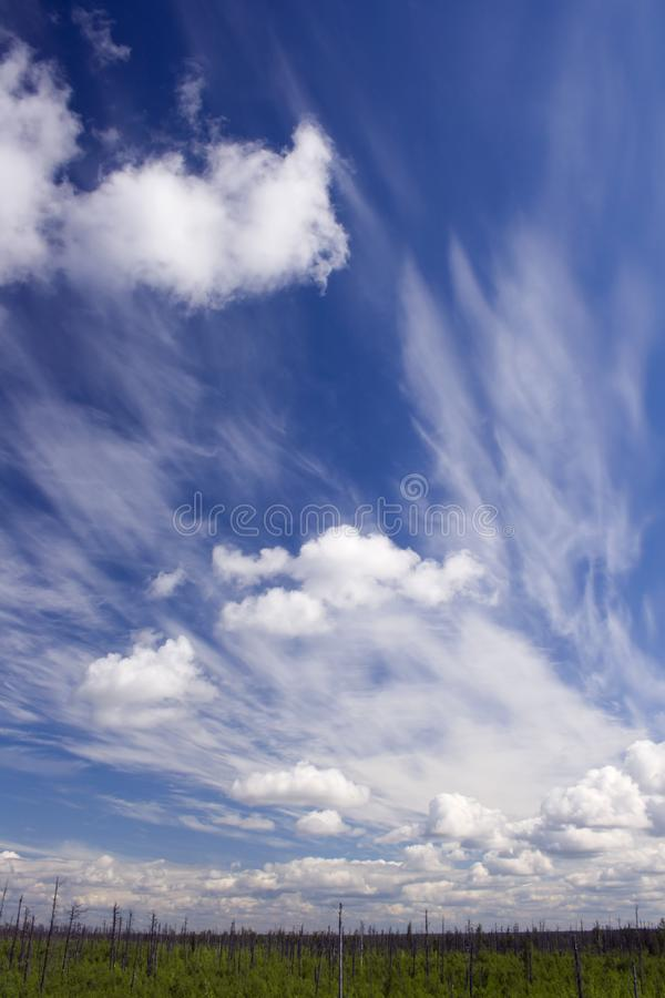 Dry forest und blue sky royalty free stock photo