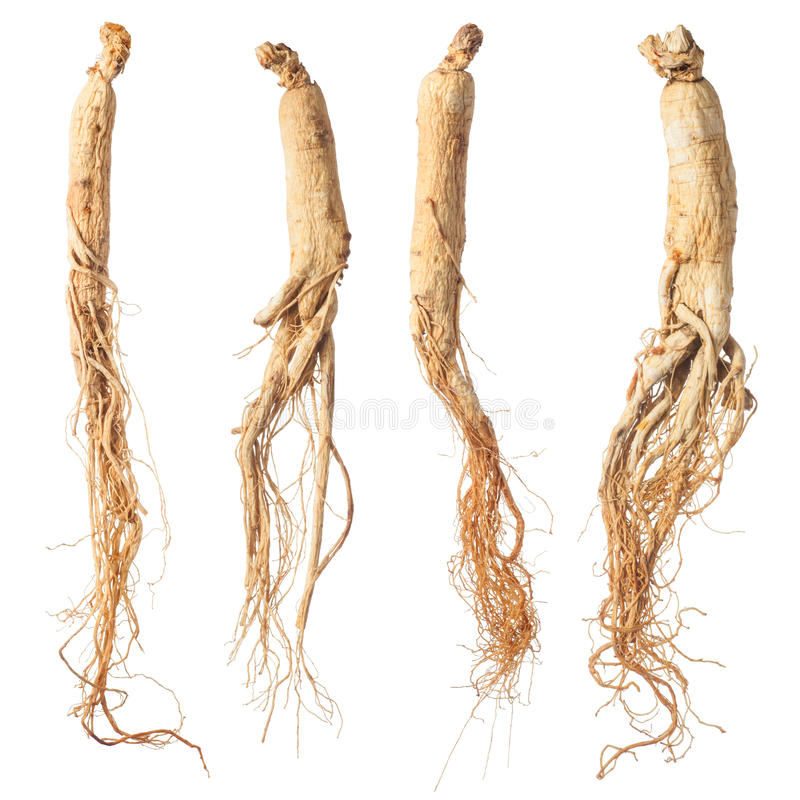 dry ginseng roots stock images