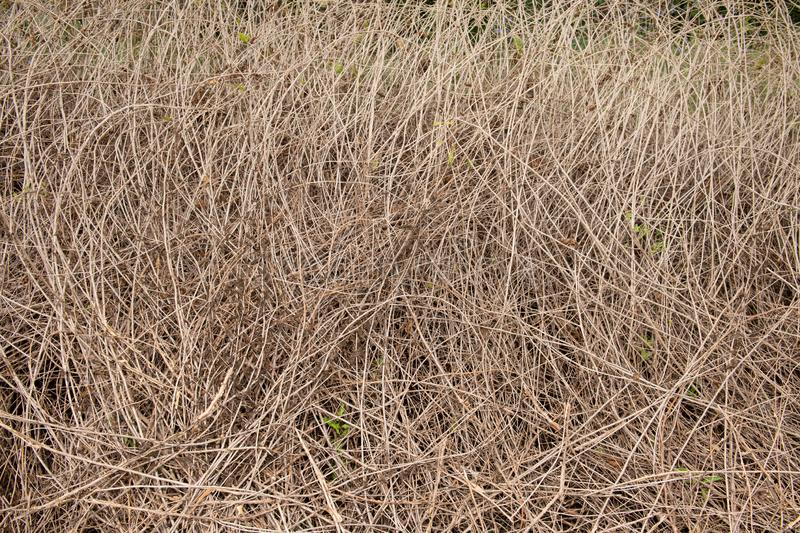 Dry Grass texture stock image  Image of grass, farm, pattern