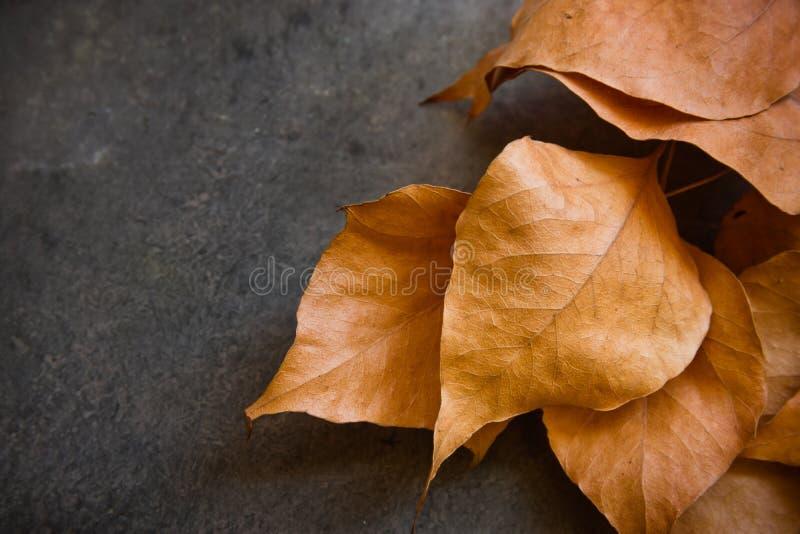 Dry golden autumn leaves on dark concrete stone background, border, fall, Thanksgiving, Halloween, card poster, school time. Dry golden autumn leaves on dark stock photos