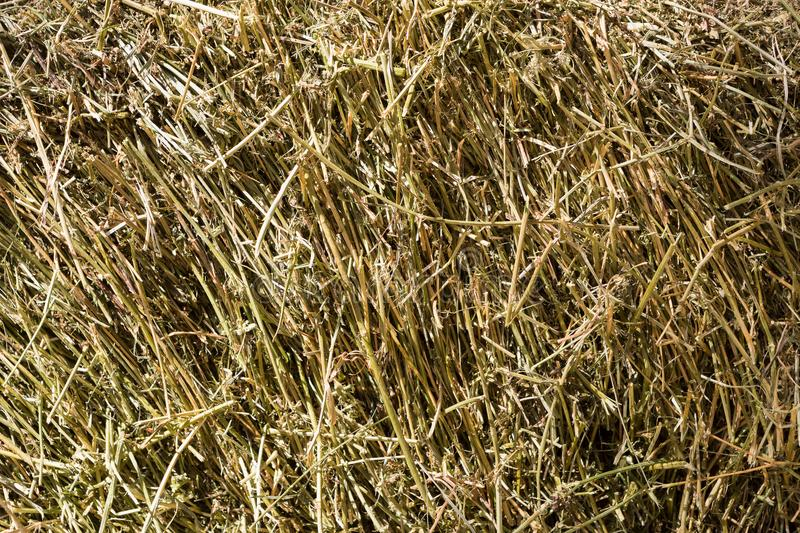 Dry straw closeup texture. Farming background. Dry golden yellow straw closeup. Farming harvest background. Agricultural pressed thatch wall texture. Abstract stock photography