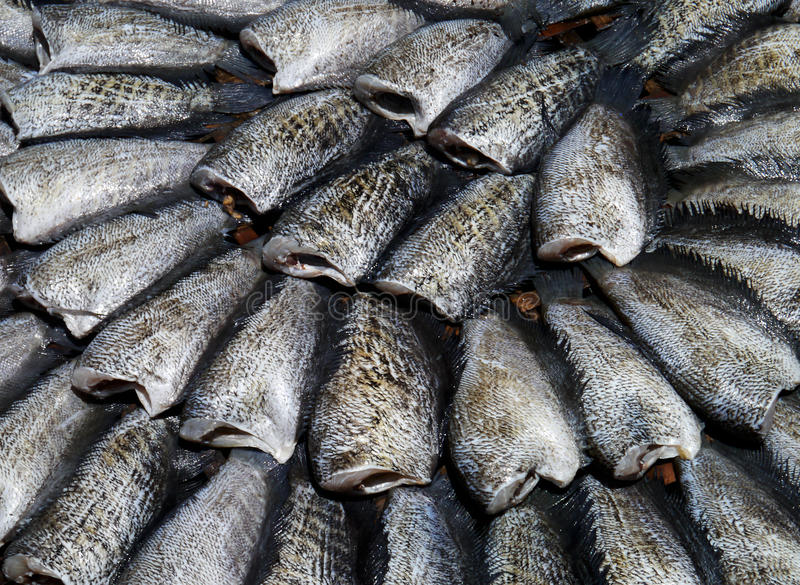 Download Dry Gourami fish stock image. Image of delicious, business - 24905337