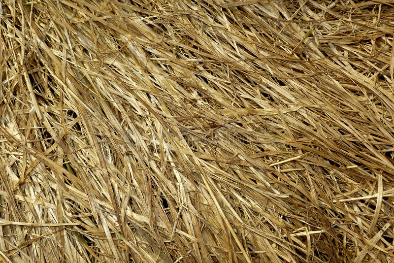 Download Dry grass stock photo. Image of nature, sear, textures - 23812174