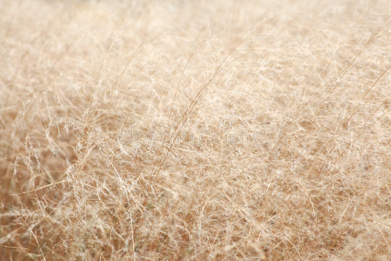 Download Dry grass stock photo. Image of grass, field, scene, nature - 27142320